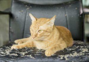 Cat Damage On Sofa
