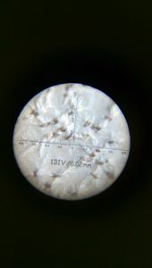Veg Tanned Leather Through A Microscope