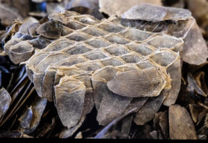 Pangolins Leather Hide Scales